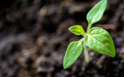 Planting a Garden?