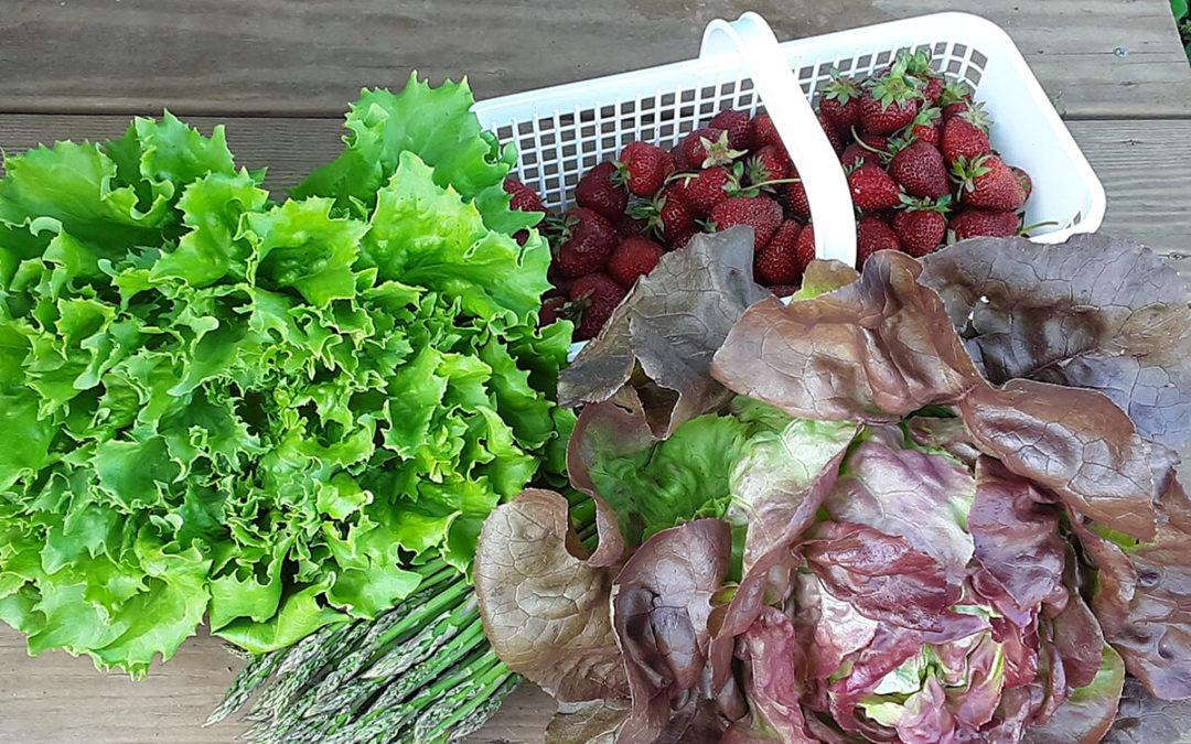 Farm Fresh Produce!