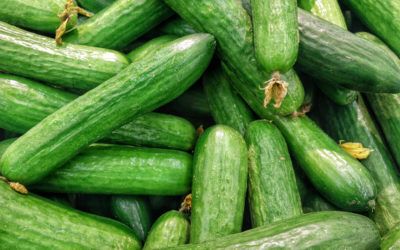 Overflowing With Cucumbers